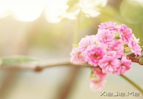 早安心语:别为不该为的人,伤了不该伤的心 (1)