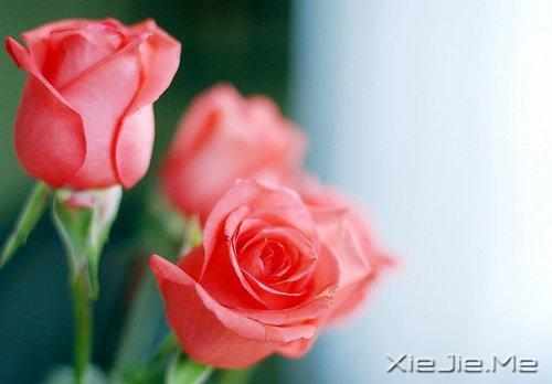 早安心语:别为不该为的人,伤了不该伤的心 (8)